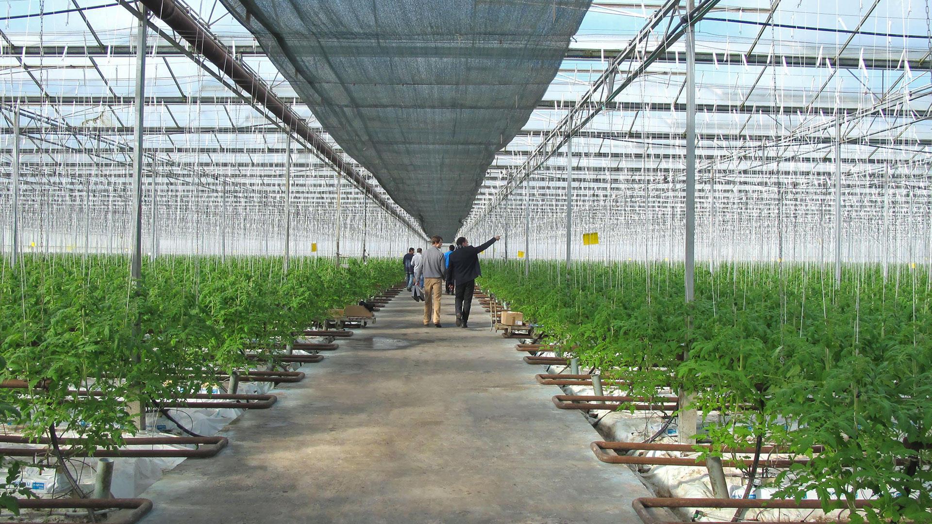 Greenhouse hooks
